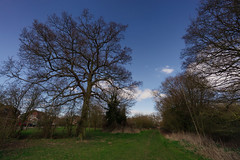 Early (Мaistora) Tags: uk blue trees england sky sunlight white bus tree grass sunshine clouds naked landscape reading early spring woods britain path bare sunny berkshire footpath springtime gren charvil maistora yahoo:yourpictures=weather