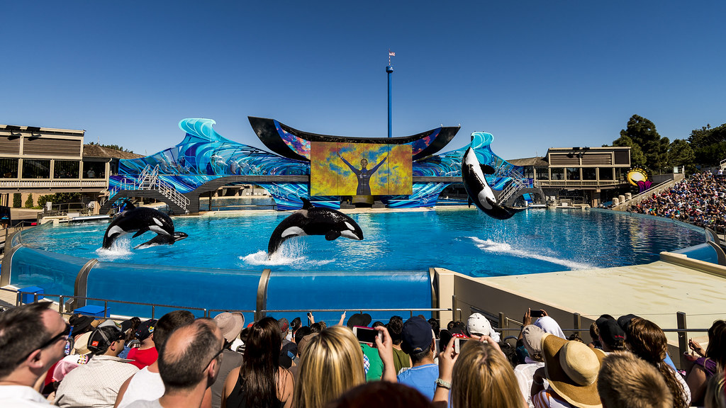 SeaWorld: One Ocean Show by SnapAdik, on Flickr