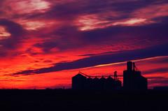 Purple Grain (Explored 4/11/15) (forestforthetress) Tags: sunset sky color clouds rural nikon farm country elevators grainelevators omot