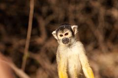 IMG_9045 (jeanpierre089) Tags: bolivien pampas djungel