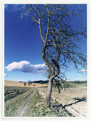 blue sky color colour tree film wet darkroom print landscape fuji room archive medium format temperature chrystal ra4 adox