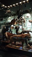 IMG_20160724_170859304 (NR Intercmbio) Tags: ny 20160724 cinema bubba gump camaro shrimp museu animais liga justia historia nrintercambio american