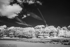 ArbiglandEIRDSC_1426 (Nick Woods Photography) Tags: trees bw clouds forest landscape mono coast sand rocks infrared coastline cloudysky sandybeach bwimage rockyshoreline infraredlandscape infraredtrees infraredconvertedcamera infraredscenery infraredvegetation