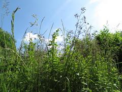 ckuchem-1240 (christine_kuchem) Tags: himmel gras garten perspektive froschperspektive grashalm