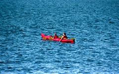 Kayak Lake Union (rwl7532) Tags: nikonf4 expiredfilm fppc41kit uniroller352 104 fpp