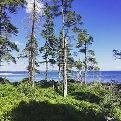 Looking east #Acadia #MountDesertIsland at Wonderland (IVSTINIANVS) Tags: ifttt instagram byjjmg iphone phone cameraphone cellular mobile cellphone