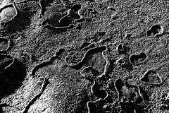 Beach art (OzzRod) Tags: pentax k1 hdpentaxdfa2470mmf28 hdpentaxda14xrearconverter monochrome blackand white coast beach sand swash strandline foam residue pattern pentaxart
