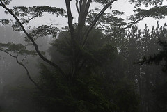 fog (Maria Medvedchenkova) Tags: tree mountain fog forest srilanka kandy nuwaraelia natural green color nikon nikond610 travel summer cold air
