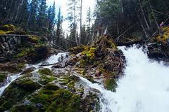 Sarrail Ridge (Light, lines, and colours.) Tags: hiking outdoors kananaskis alberta peter lougheed park lake forest