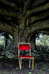 image (Kathi Huidobro) Tags: abandoned urbandecay derelict juxtapose southlondon tree chair park life london outofplace composition redchair abstract moody