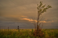 Tripod and Tree (thefisch1) Tags: tripod nikon sunrise sunset storm tree working kansas cloud pasture grass fence post oogle interesting turbulence colorful leaf leaves horizon