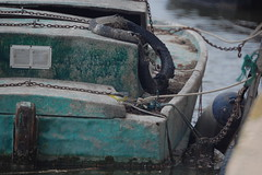 Gray wagtail (taylor_pj) Tags: ave bird albufera