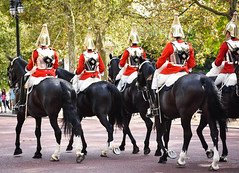 Household cavalry (littlestschnauzer) Tags: london military royal uniform 2016 uk british england horses mounted soldiers changing guard parade smart horseguard household cavalry horse