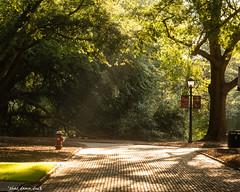 University of South Carolina Pathway (that_damn_duck) Tags: walkway pathway universityofsouthcarolina sunrays bricks campus college trees nature