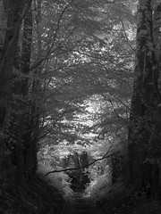 Sleepy Hollow (Dylan Nardini) Tags: d80 trees summer scotland infrared woods nikon clydevalley sun leaves ir foliage light