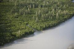 060727-511 (USFS Region 10) Tags: chugachnationalforest alaska forestservice aerial princewilliamsound pws copperriverdelta cordova copperriver moose alcesalces