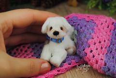 rex01 (Zhanna Zolotina) Tags: miniature dog ooak handmade toyzz tinydolhousetoyzz altair teddy bear dollhouse puppenhaus blythe