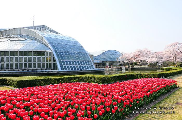 京都府立植物園 (10).jpg
