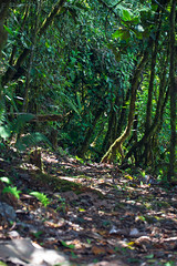 Trails at Septimo Paraiso (Shannon Bowley (TheTyro)) Tags: cloud forest toucan reserve trail paraiso 2015 septimo mindo
