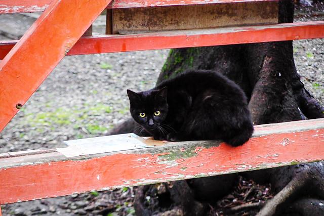 Today's Cat@2015-04-07