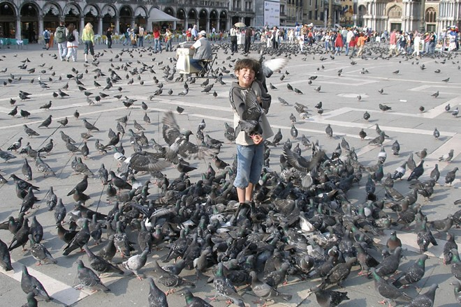 Quảng trường nổi tiếng này có hàng ngàn con bồ câu.