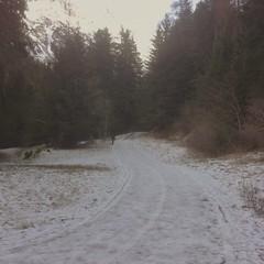 Street. (loi_davide44) Tags: street trees white mountain snow tree ice neve montagna brescia vacanze ghiaccio pontedilegno valsozzine