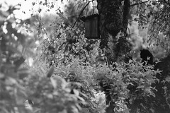 Warten (Christian Güttner) Tags: blackandwhite bw tree film nature monochrome animal analog cat 35mm germany deutschland tiere europa natur kitty natura nrw sw katze analogue tyskland baum kamera träd euregio schwarzweis niemcy czarnobiale moersch schwarzweisfotografie thecatwhoturnedonandoff moerschecodeveloper ecodeveloper littledoglaughednoiret