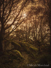 (micahmoreland) Tags: painterly tree nature rock digital forest painting smooth atmosphere haunting concept