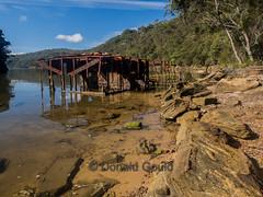 Waratah Creek_160710_18887 (Donald Go) Tags: park creek ring ku national newsouthwales waratah gai placesaustralia kuringgainatpark kuringgainatparkwaratahtrack
