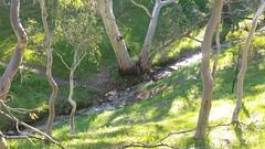 20160716_143857 (StephenMitchell) Tags: adelaidegreenhills nature organic trees gully valley hill mountain blackwood belair edenhills southaustralia trek walk creek rock stone