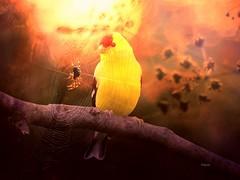 """Mutlu olmak istiyorsan bir amaca balan; insanlara ya da eyalara deil..."" Einstein *** #photography #nature #bird #spider #sunrise #sunny #spring #travel #petsandanimals #photodesign #illustration #edited #artwork #freeart #hdr #bokeh #emotions #colorf (mrbrooks2016) Tags: illustration freeart photography bird artwork emotions edited photodesign colorful hdr petsandanimals nature spring sunny spider sunrise bokeh travel"