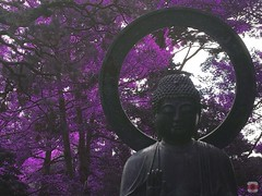 Enlightenment (getinfraapp) Tags: mobile digital ir photography photo day purple photos kodak violet surreal infrared dreamy trippy psychedelic ios app apps iphone 6s infraredphotography aerochrome