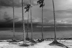 Storm is a storm (Beth Reynolds) Tags: storm tropical rin light lightning downtown landscape weather florida beach tampabay stpetersburg palm trees wind blackandwhite