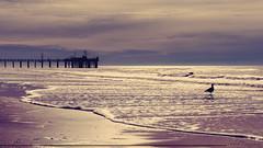 Tengo un lugar lejos de todo (Sebas Fonseca) Tags: sebafonseca santateresita buenosaires argentina beach sunset sunshine bird sea travel traveler landscape sky clouds backlight sony a6000 1650 color dock colors