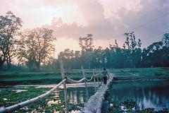Acrossing (hiphopmilk) Tags: film analog analogue 135film 35mm kodak jaredyeh hiphopmilk nepal chitwan national park world heritage site east rapti river sauraha jungle wildlife camp bridge sun sunset trees bamboo across