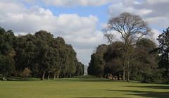 Kew Gardens (lazy south's travels) Tags: park uk trees england panorama tree london kew gardens britain lawn panoramic