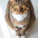 Our cat Shetti // Testshot // Nikkor 135 f/2,8 AI