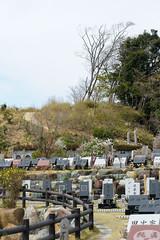 DS7_7665.jpg (d3_plus) Tags: park street plant flower nature cemetery japan walking temple tokyo nikon scenery bokeh outdoor fine telephoto bloom  streetphoto  nikkor       fujisawa  thesedays 80200mm 80200  fineday     8020028  80200mmf28d  80200mmf28    80200mmf28af  d700  kanagawapref  nikond700   afzoomnikkor80200mmf28 afzoomnikkor80200mmf28s aiafzoomnikkor80200mmf28s aiafzoomnikkor80200mmf28sed chofukutemple muraokacastlepark