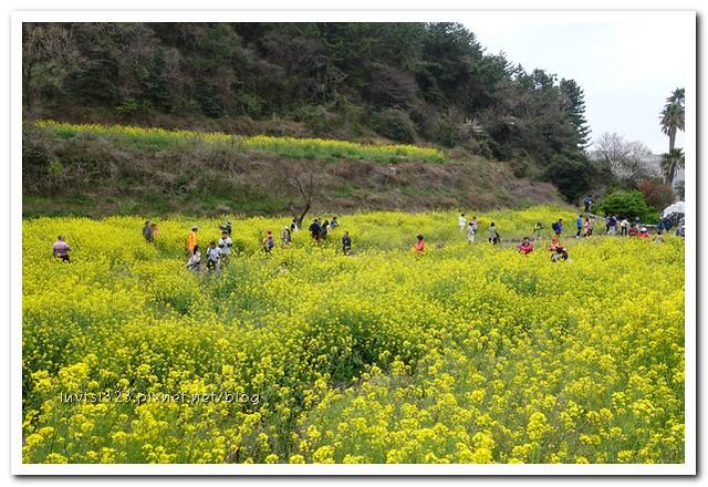 사귀포유체꽃축제36