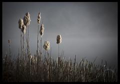 YT4B7385 (dkashton61) Tags: mist fog sunrise canon lens mark iii lancashire preston l 5d 100400