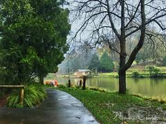 IMG_8641 (Naomi Creek) Tags: emerald lake park trees morning mist water green lush paddleboat reflection winter grass