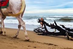 Puri_July_2016_0112 (Satyaki Basu) Tags: 1755 600d bayofbengal beach canon f28 india orissa people places puri sea