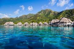 Day 177-365 Moorea (giuliomeinardi) Tags: wedding sea canon project island honeymoon mare blu luna snorkeling honey di 365 tahiti miele bora matrimonio bungalow isola immersioni morra polinesia pesco 24105 corallo francese barriera overwather giuliomeinardi 5d3 giuliomeinari