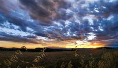 Cels de cotofluix (jocsdellum) Tags: cel sky nvols capvespre atardecer sunset clouds landscape blat trigo wheat nwn