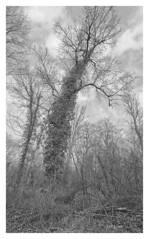 riverside woodland (e27182818284) Tags: tree rhine rhein baum sigma1020mmf35exdchsm