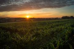 Fareham Dawning (hutchyp) Tags: sun sunrise dawn hampshire flare burst rise fareham