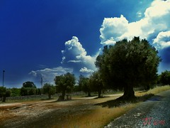 Campagna Pugliese (triziofrancesco) Tags: trees alberi clouds nuvola country campagna puglia ulivi