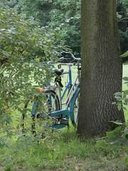 Parque Lazienki (dokusha.san) Tags: polonia poland varsovia warsaw lazienki parque park bicicletas bycicle