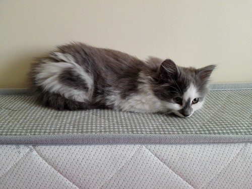 Lulu, our new cat