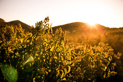 Sunrise (imbaoroh) Tags: california morning orange sun mountain nature beautiful beauty yellow sunrise canon landscape golden early bush scenery san iron bright god outdoor diego scene hike adventure creation flare shrub elevate